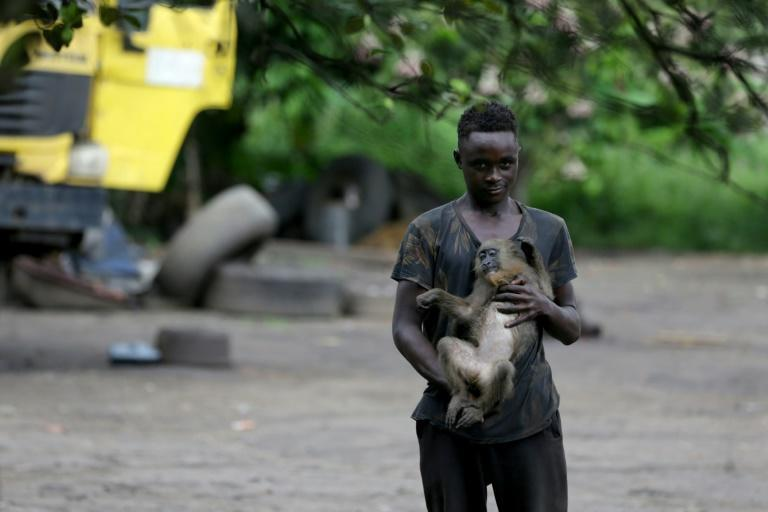 Close contact: A boy plays with a monkey in the courtyard of a home in Franceville