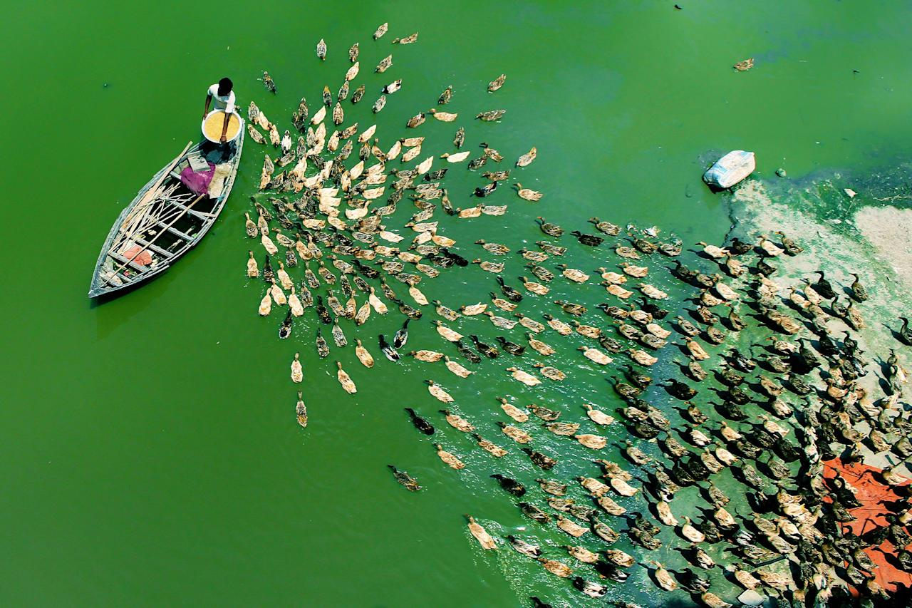 <p>That's quackers! These overhead photographs of hundreds of ducks following their leader down a river in Bangladesh are truly mesmerizing. (Photo: Rafeur Rahman/Caters News) </p>