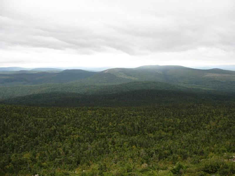 Global warming to drastically reduce regrowth of key softwood species in Maritimes