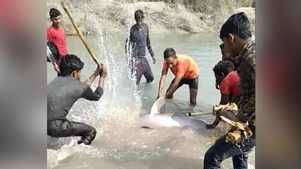 UP: Three arrested for killing endangered Gangetic dolphin