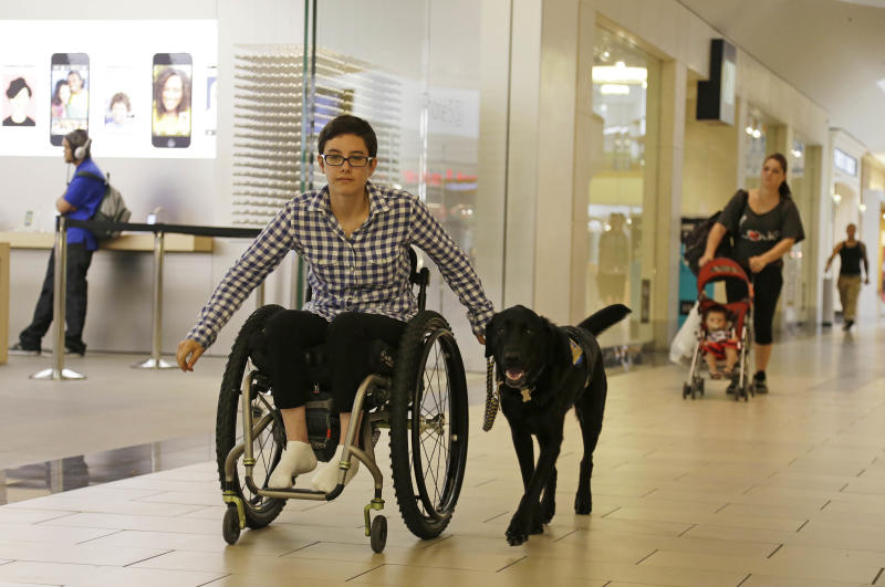 """In this photo taken Tuesday, Oct. 8, 2013, Wallis Brozman is aided by her service dog Caspin while going through a shopping mall in Santa Rosa, Calif. Other victims of unruly fake service dogs are real service dogs, said Brozman, 27, of Santa Rosa. She has dystonia, a movement disorder that left her unable to walk and barely able to talk. She needs a wheelchair, voice amplifier and her service dog who responds to English and sign language. """"When my dog is attacked by an aggressive dog, he is not sure what to do about it and looks to me. It becomes a safety issue, not only for my dog, the target of the attack, but me if I am between the dogs,"""" Brozman said.(AP Photo/Eric Risberg)"""
