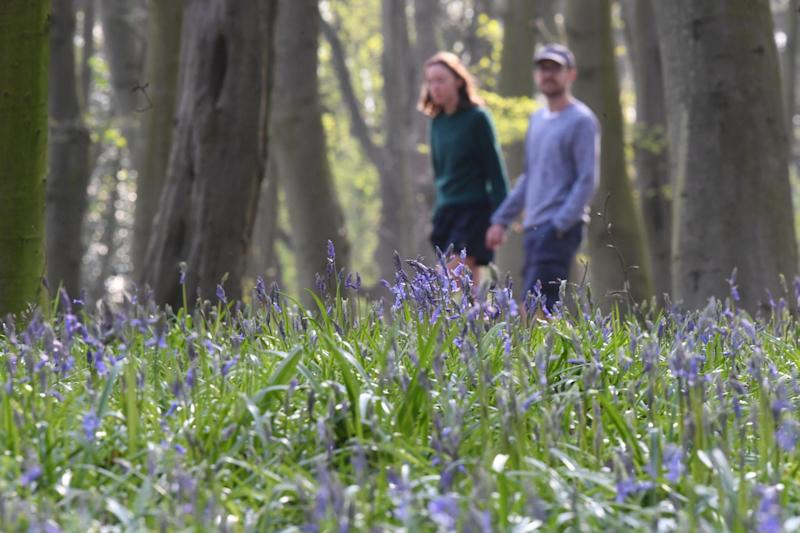 People walk through Epping Forest: PA