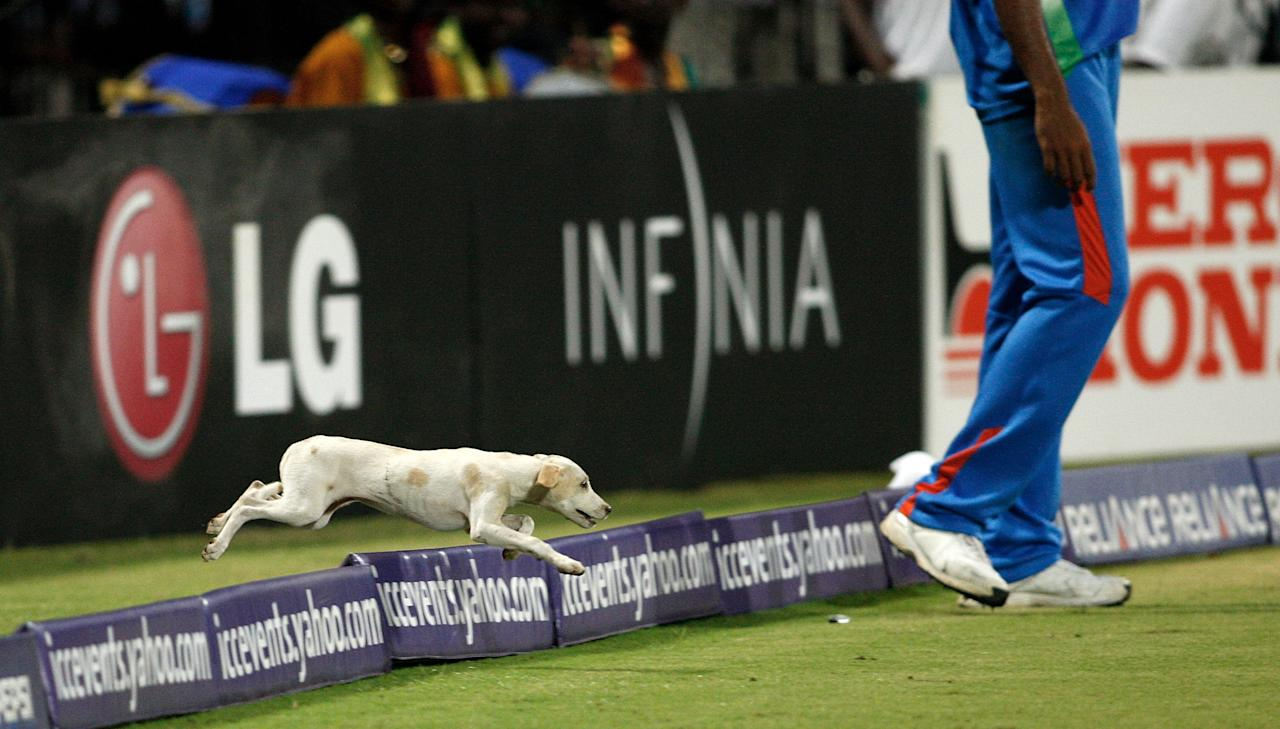 CHENNAI, INDIA - MARCH 20:  A stray dog invades the pitch during the Group B ICC World Cup match between India and West Indies at M. A. Chidambaram Stadium on March 20, 2011 in Chennai, India.  (Photo by Graham Crouch/Getty Images)