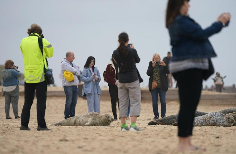 People taking photographs of seals on the beach at Horsey beach in Norfolk (Joe Giddens/ PA) (PA Wire)