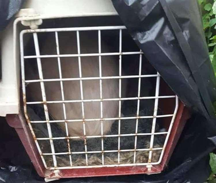 Artex was found in cage wrapped in a bin bag (Picture: Bredhurst Cats Protection)