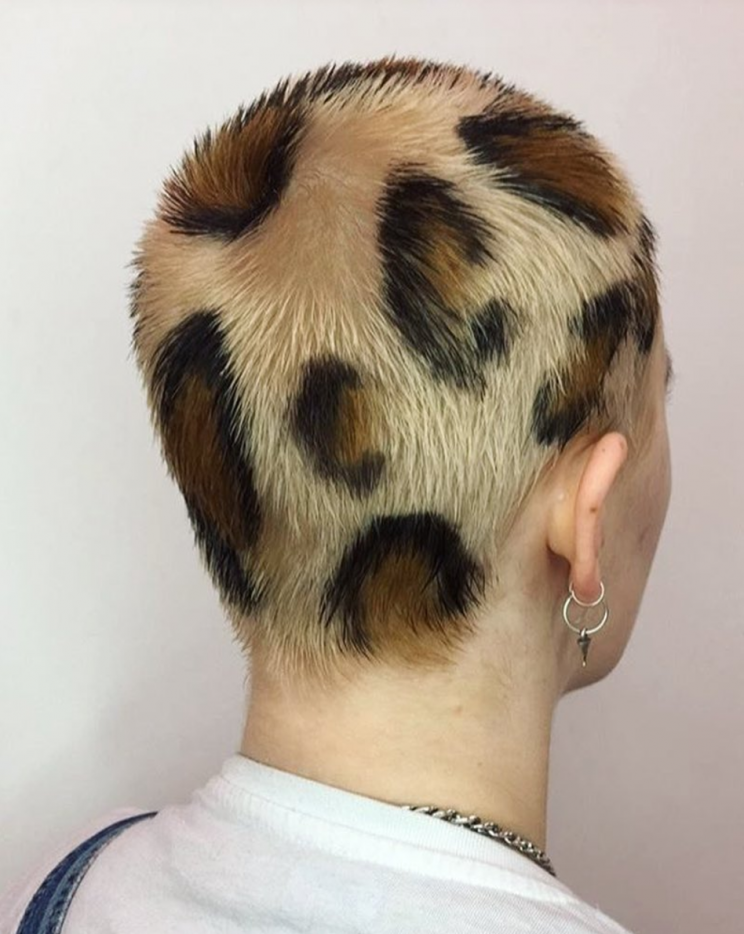 leopard hair style would you be brave enough to sport leopard print hair 2090