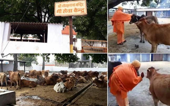 Bundelkhand: Chief Minister Yogi Adityanath to rescue abandoned cows