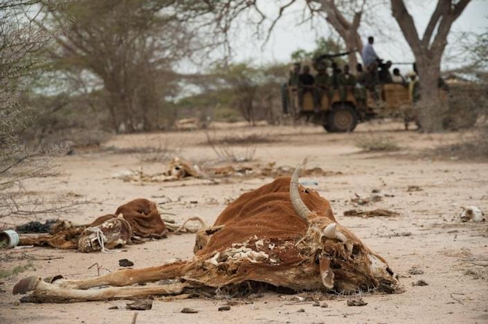Severe drought and conflict in Somalia caused a famine in 2010-2012 that eventually killed a quarter of a million people (AFP Photo/Phil Moore)