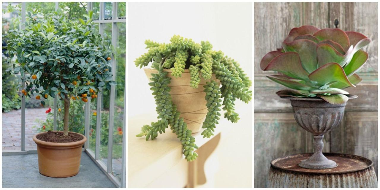15 unique indoor plants that will liven up your home 7 uncommon indoor plants