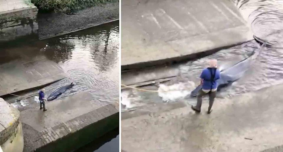 Video shows a man hosing the whale while it was trapped at the lock.