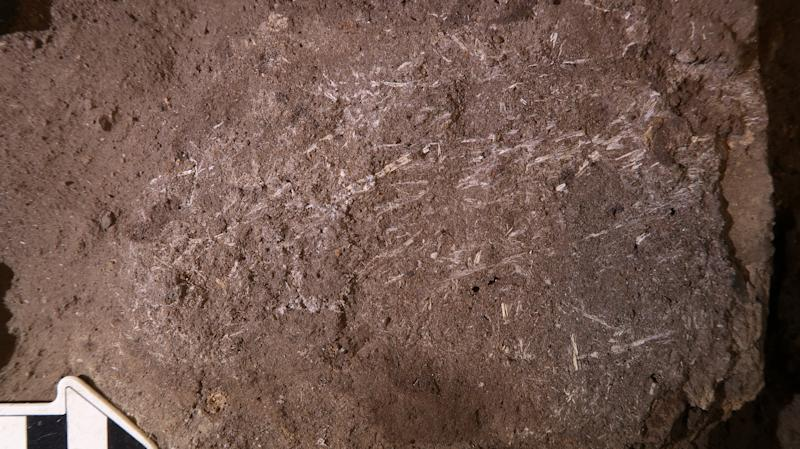 The 200,000-year-old fossilised grass fragments at the Border Cave