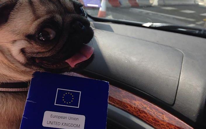 Dog owner Nick Petre has paid 100 euros for a Belgian pet passport for his pug, Pippa, effectively giving it dual-citizenship