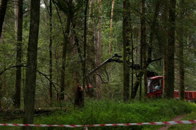 Logging in ancient forest would affect rule-of-law process against Poland: EU