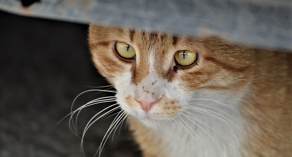 Cats will often run away when spooked by tremors. Source: Getty