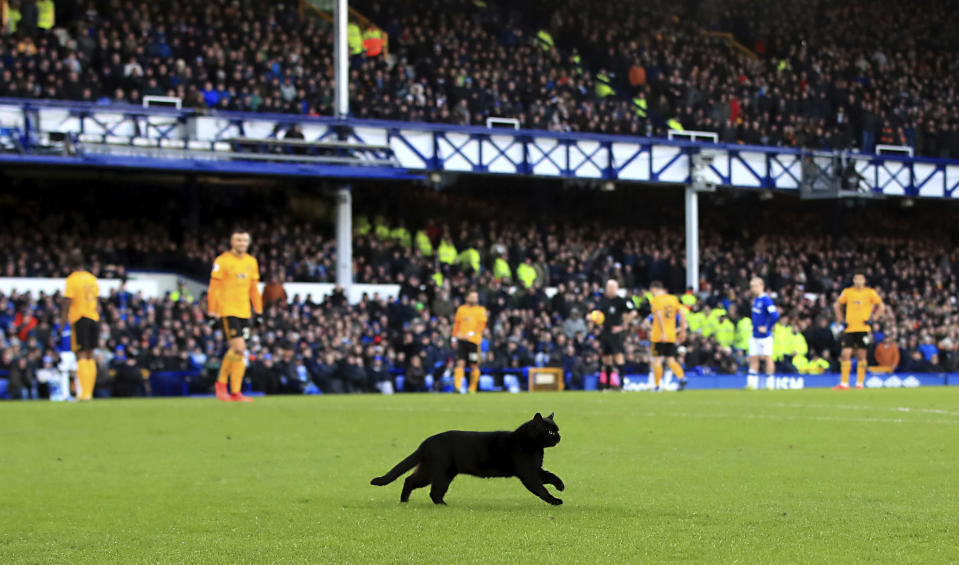 In this Saturday, Feb. 2, 2019 photo, a black cat on the pitch during the English Premier League soccer match between Everton and Wolverhampton Wanderers, at Goodison Park, in Liverpool, England. A cat strayed onto the field and stopped play for about three minutes at Goodison Park on Saturday as stewards scrambled to usher it away. Everton fans might have been glad of the respite. (Peter Byrne/PA via AP)