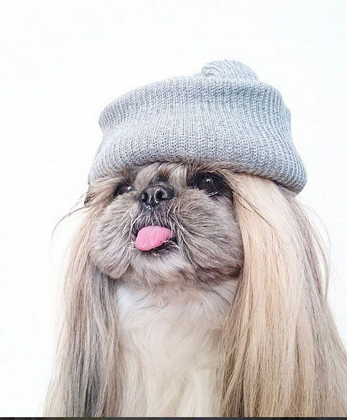 The adorable puppy can even pull off wearing a hat.