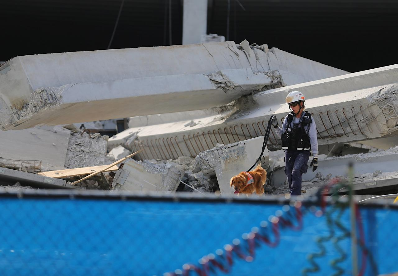 DORAL, FL - OCTOBER 10:  A Miami-Dade search and rescue worker and her dog look for possible survivors in the rubble of a four-story parking garage that was under construction and collapsed at the Miami Dade College's West Campus on October 10, 2012 in Doral, Florida.  Early reports indicate that one person was killed in the collapse, at least seven people injured and one may be buried in the rubble.  (Photo by Joe Raedle/Getty Images)