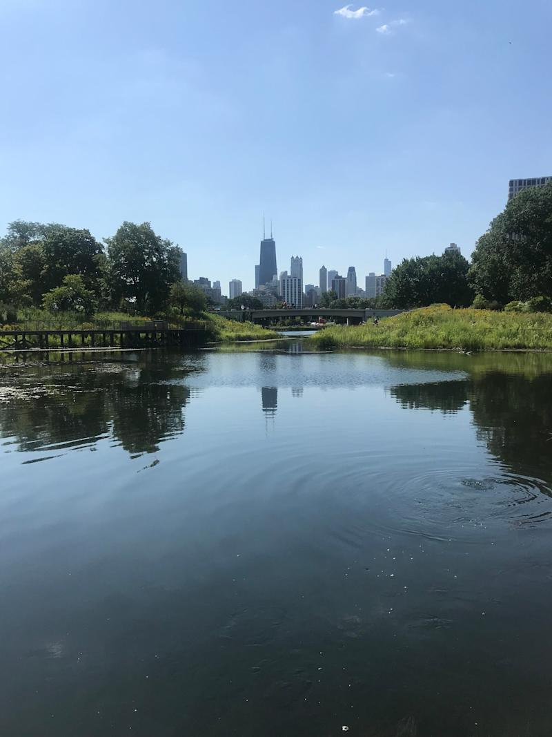 The Chicago skyline from Lincoln Park Zoo, which is free and open every day.