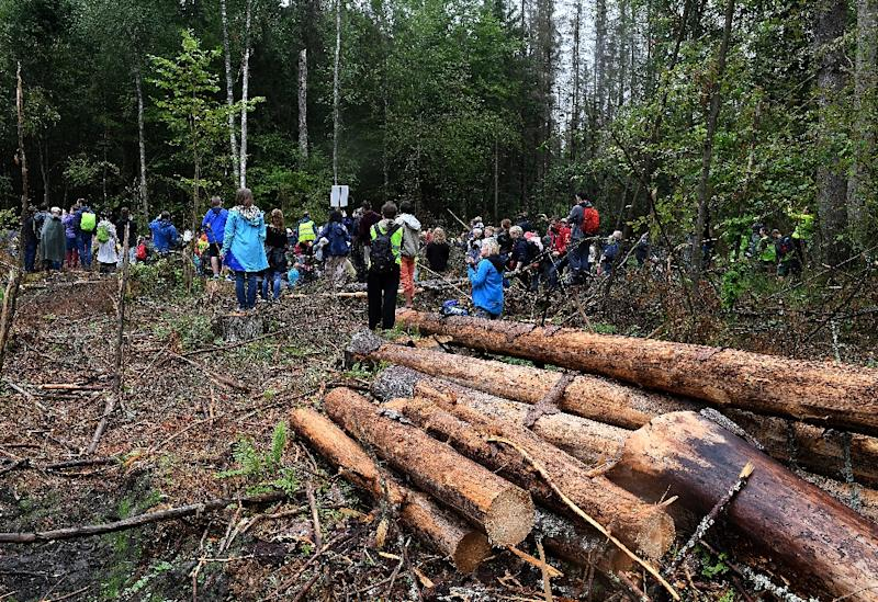 Poland illegally cut down ancient forest