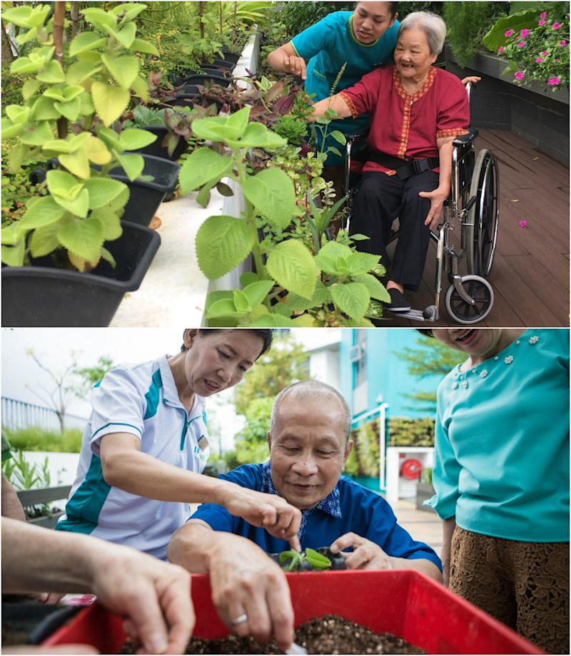 NTUC Health Nursing Home residents participating in activities at the therapeutic garden. (PHOTOS: NTUC Health)