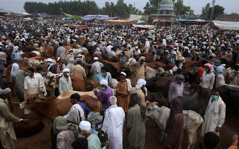 People wearing protective mask to help to contain the spread of coronavirus visit cattle market set up for the upcoming Muslim festival Eid al-Adha in Peshawar, Pakistan, Saturday, July 4, 2020. - Muhammad Sajjad/AP