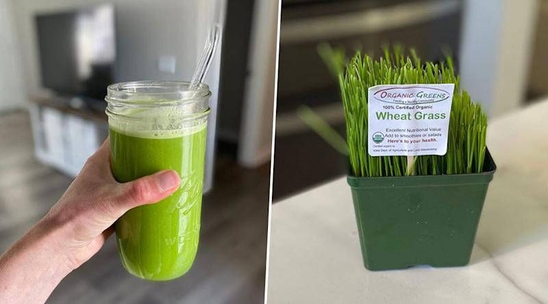 Wheatgrass Health Benefits: From Elimination of Toxins to Strong Immunity, Here Are Five Reasons to Have This Superfood