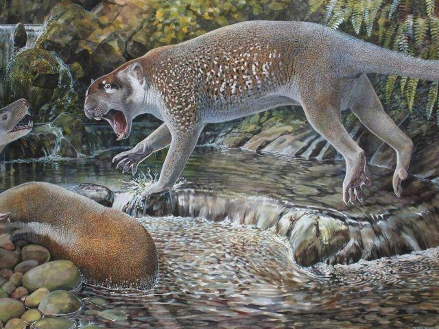 New species of 'marsupial lion' found in Australia
