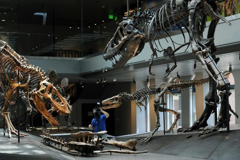 "The Tyrannosaurus rex ""Growth Series"" at the Natural History Museum of Los Angeles features a baby (C), juvenile (L) and young adult T. rex (R)"