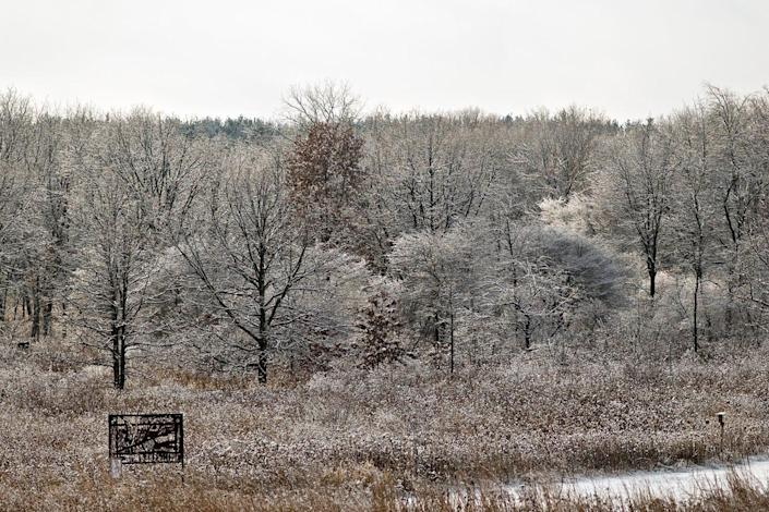 Snow clings to trees in the University of Wisconsin-Madison Arboretum.