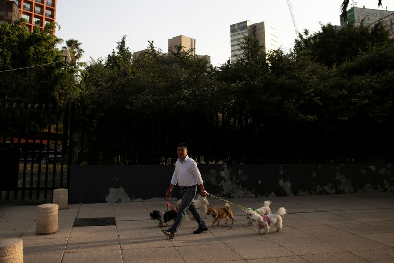 A man walks with a few dogs after Mexico's government declared a health emergency on Monday and issued stricter rules aimed at containing the fast-spreading coronavirus disease (COVID-19), in Mexico City