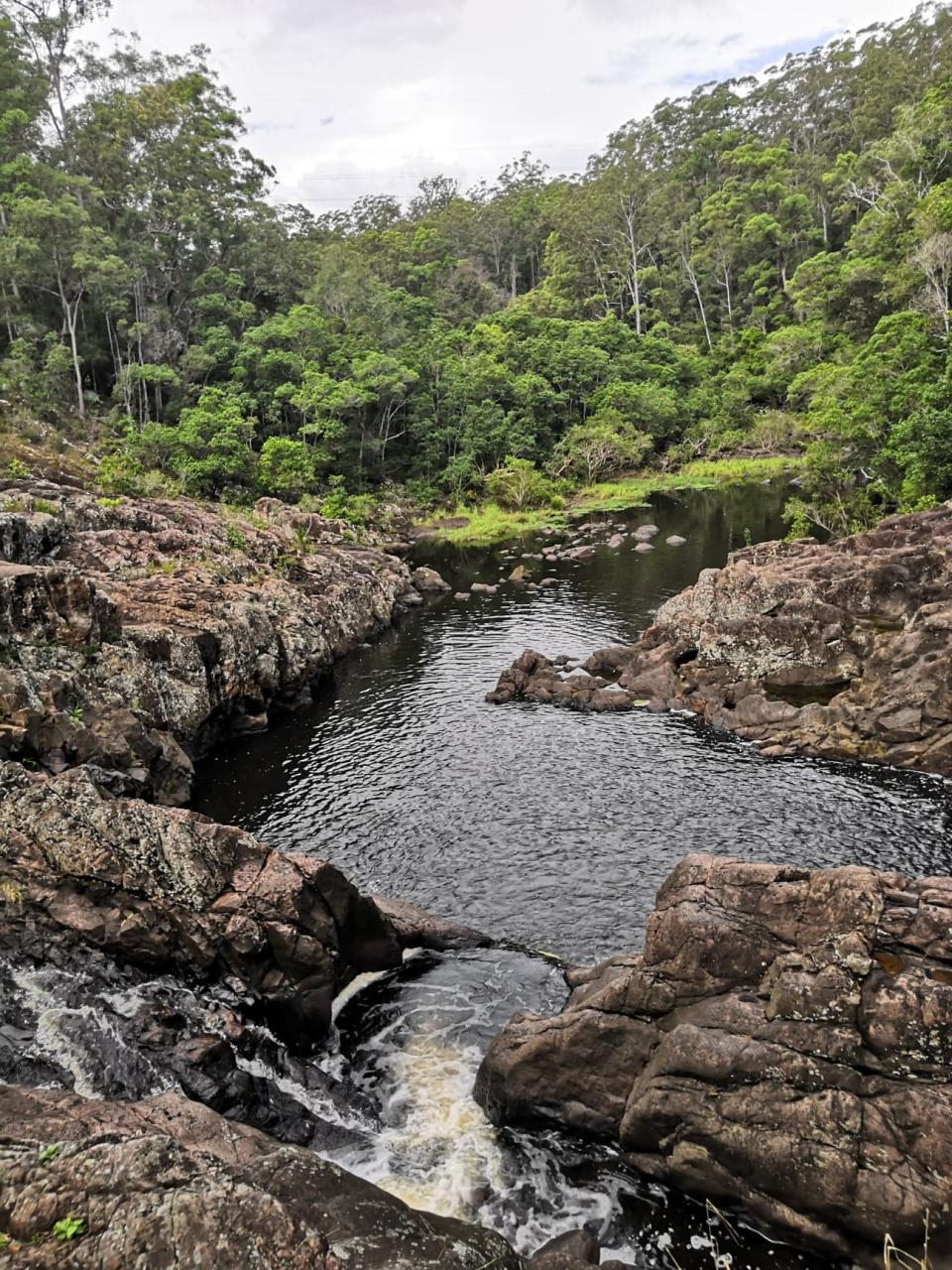 Todd Dent and Javier Pastor de Frutos came across a dead platypus at Sunshine Coast's Wappa Falls.