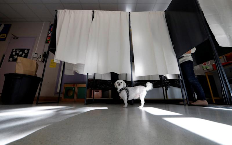 A dog waits as its owner participates in the first round of 2017 French presidential election in Nice - Credit: ERIC GAILLARD/REUTERS