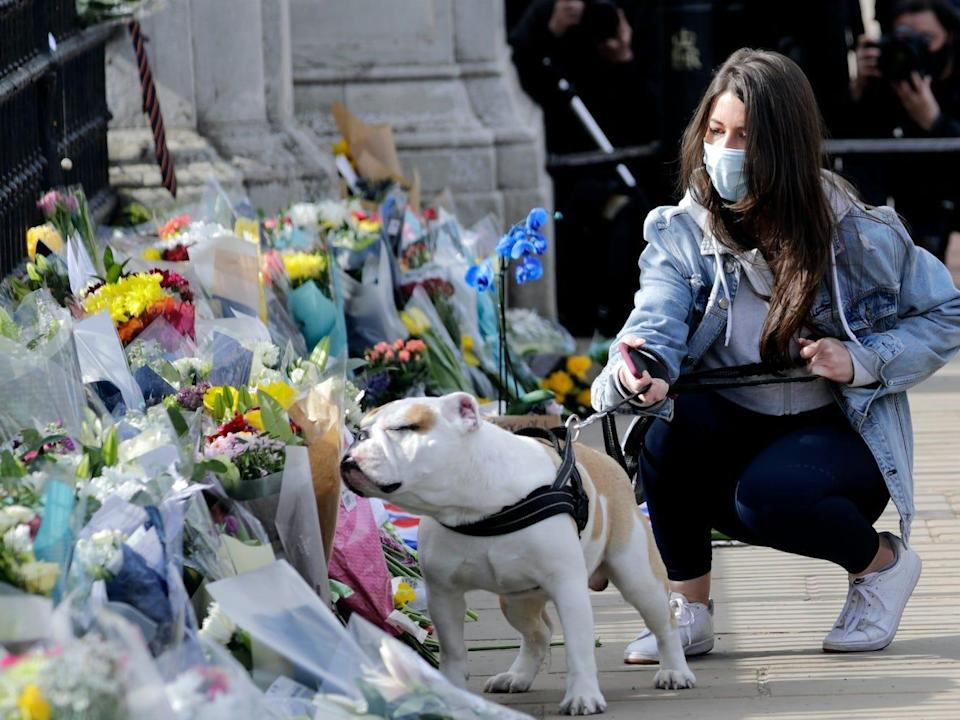 A dog smells the flowers in the floral tributes outside of Buckingham Palace on April 09, 2021 in London.
