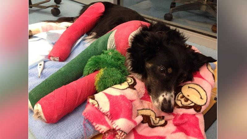 Appeal to Help Veteran's Dog Prompts Outpouring of Donations