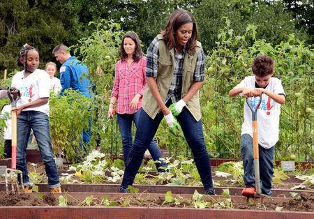 First Lady Michelle Obama (C) encourages a youngster with a pitchfork as they harvest vegetables in the White House Kitchen Garden, where she is promoting healthy eating habits by the nation's youth, in Washington, U.S. October 6, 2016. REUTERS/Mike Theiler/File Photo
