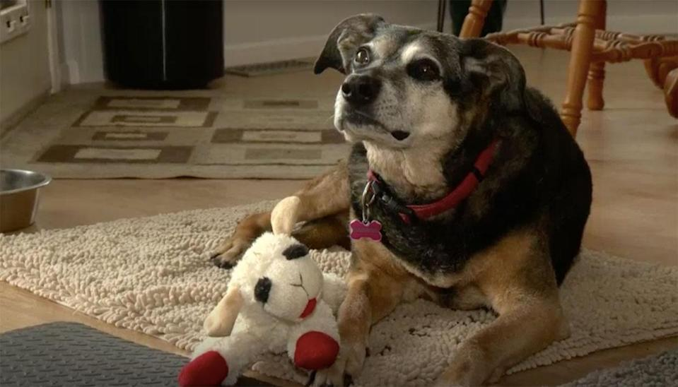 Sadie did not eat for 10 days after her owner's death. Source: Global News