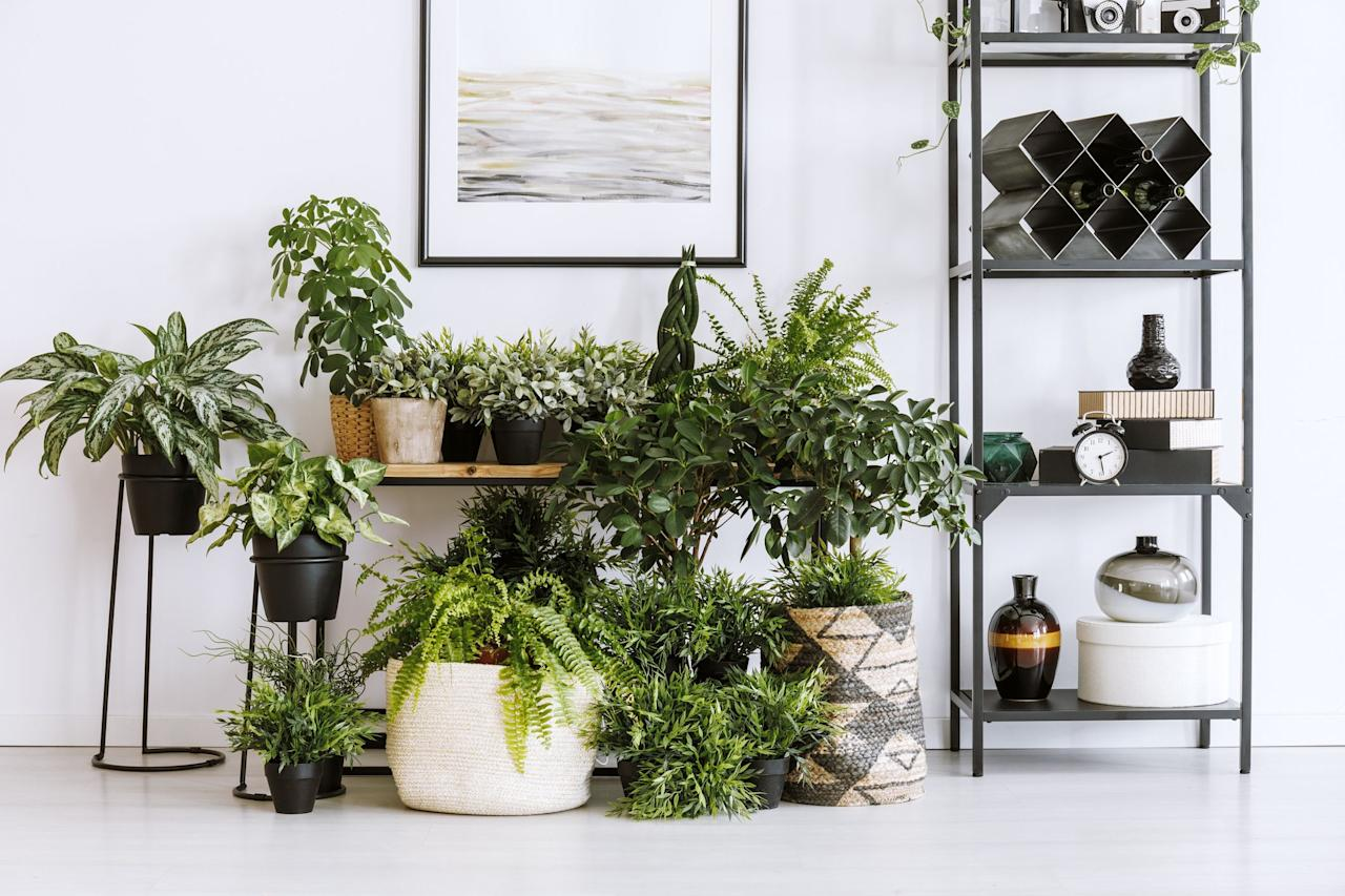 "<p>Whether you have a green thumb or not, you're probably privy to the many benefits of <a href=""https://www.goodhousekeeping.com/home/gardening/advice/g1285/hard-to-kill-plants/"" target=""_blank"">live plants</a>. They can help purify the air, reduce stress, and even <a href=""https://www.goodhousekeeping.com/home/organizing/a32066774/marie-kondo-joy-at-work-book/"" target=""_blank"">boost your productivity</a>. And let's not overlook their ability to create visual interest in your home. That said, finding the right plant can be quite challenging, as there are countless easy-to-care-for varieties that can breathe life into your space. From fiddle leaf fig trees that don't require a ton of water to striking palm plants that will take you back to your <a href=""https://www.goodhousekeeping.com/life/travel/g4297/best-coastal-towns-in-america/"" target=""_blank"">last beach getaway</a>, here are 10 of the best aesthetic plants you can find online right now. </p>"