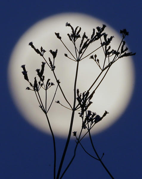 "A ""supermoon"" rises behind roadside plants growing in Prattville, Ala., Saturday, June 22, 2013. The biggest and brightest full moon of the year graces the sky early Sunday as our celestial neighbor swings closer to Earth than usual. While the moon will appear 14 percent larger than normal, sky watchers won't be able to notice the difference with the naked eye. Still, astronomers say it's worth looking up and appreciating the cosmos. (AP Photo/Dave Martin)"