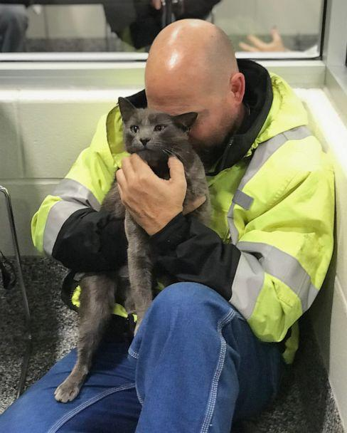 PHOTO: Ashes, a 3-year-old cat found at a truck stop in Ohio, was reunited with his owner with the help of his microchip. (Courtesy Lollypop Farm)