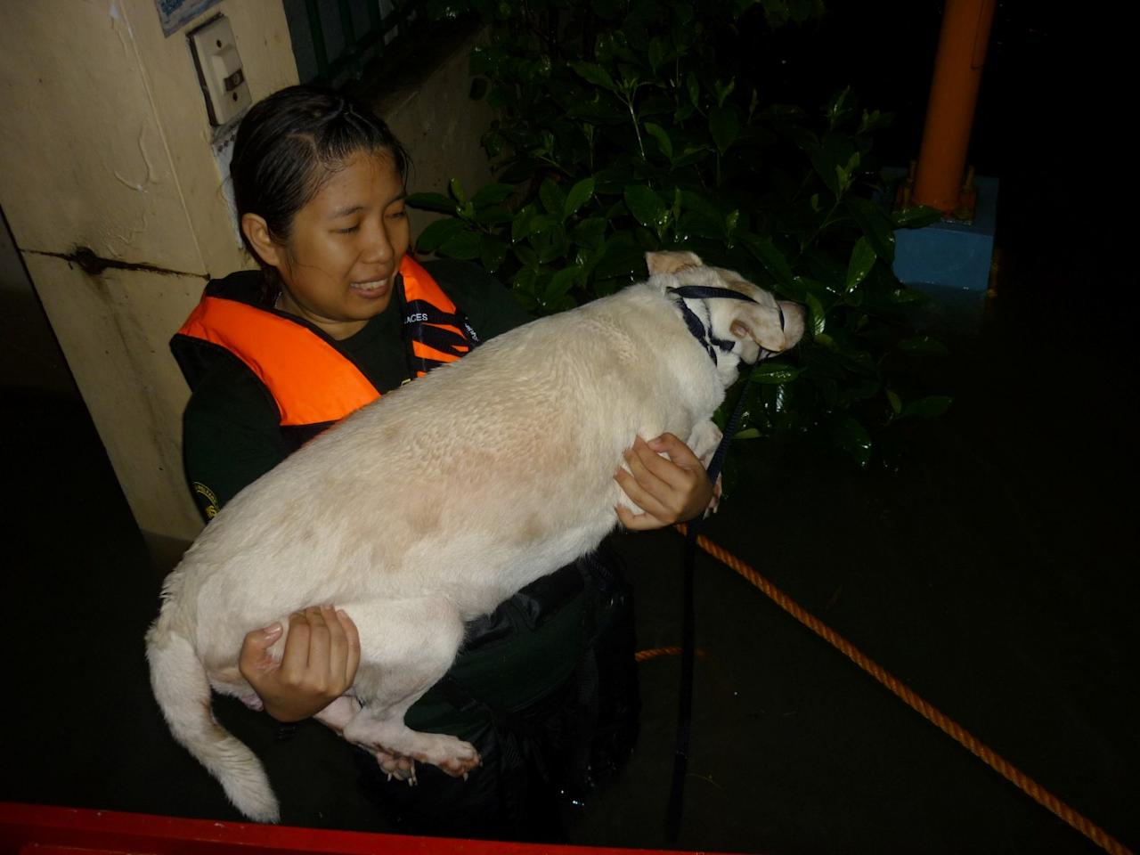 PAWS volunteer Cha Laxamana carries a stranded dog to safety in Riverside, Pasig