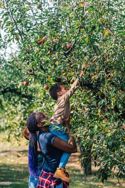 "<p>It may not be 100 percent Halloween, but apple picking is a decidedly fall activity. Use your haul for bobbing apples. Check out the <a href=""https://www.countryliving.com/life/travel/g2623/apple-picking/"" rel=""nofollow noopener"" target=""_blank"" data-ylk=""slk:best apple picking farms and orchards"" class=""link rapid-noclick-resp"">best apple picking farms and orchards</a> for times before venturing out.</p>"