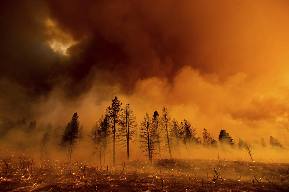 Smoke envelops trees as the Sugar Fire, part of the Beckwourth Complex Fire, burns in Doyle, Calif., Friday, July 9, 2021. (AP Photo/Noah Berger)