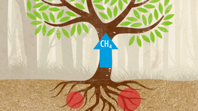 trees-are-polluters-too-tree-trunks-release-methane-into-the-atmosphere