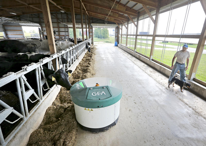 A robotic feeder made by GEA Farm Technologies makes its way through the cow barn at the De Buhr farm in Lancaster, Wisconsin, on Aug. 31, 2017. Mechanization has increased on dairy farms as farmers struggle to find enough workers. (John Hart/Wisconsin State Journal)