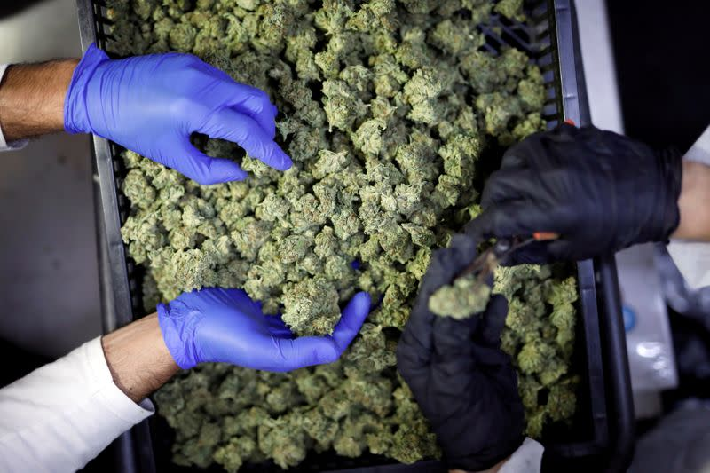 Cannabis firms see jump in insurance costs to protect leaders as investors sue
