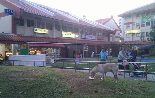 Jurong's 'Hachiko' being feed in a bowl by a newspaper vendor (Yahoo! file photo)