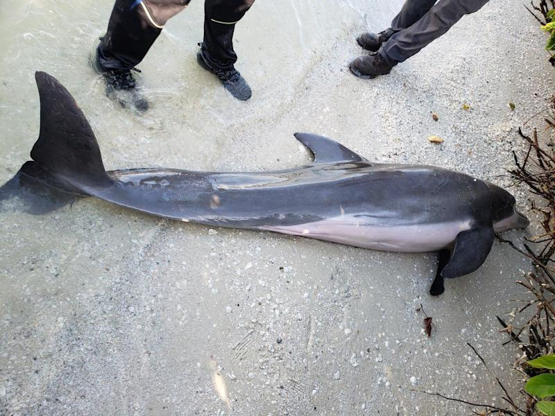 2-Foot Hose Found in the Stomach of Dead Dolphin in Florida