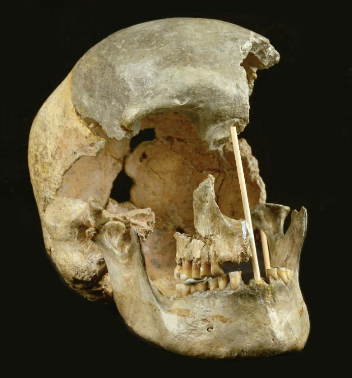 Genetic analysis of a skull found in 1950 reveals it dates back at least 45,000 years
