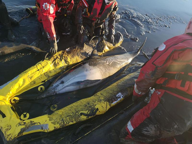 Undated handout photo issued by Essex County Fire & Rescue Service of firefighters rescuing two dolphins using a hovercraft and an inflatable sled after they became stuck in mud near Standford-le-Hope in Essex. PA Photo. Issue date: Monday January 20, 2020. See PA story ANIMALS Rescue. Photo credit should read: Essex County Fire & Rescue Service/PA Wire NOTE TO EDITORS: This handout photo may only be used in for editorial reporting purposes for the contemporaneous illustration of events, things or the people in the image or facts mentioned in the caption. Reuse of the picture may require further permission from the copyright holder.