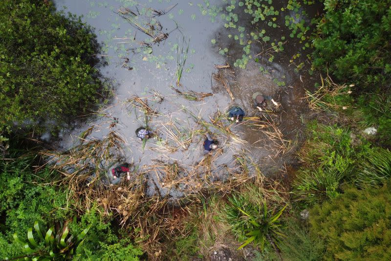 Drone view shows researchers looking for frogs at a pond in Cooranbong